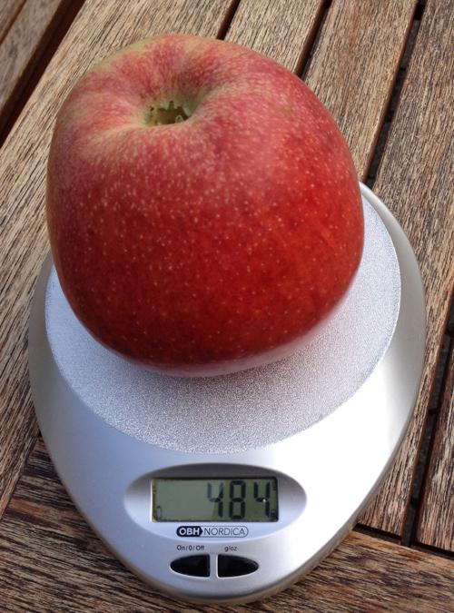 Mathildeæble på 484 gram