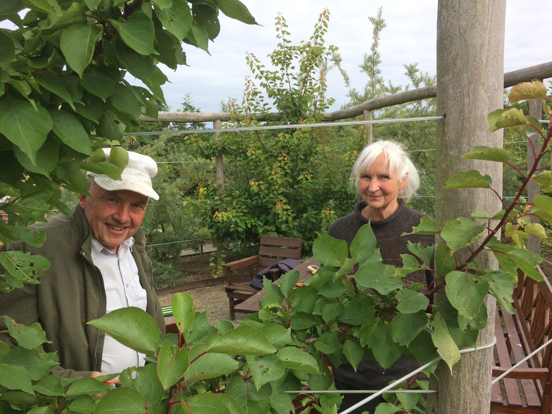 Peder og Gerd beskærer abrikostræer i Haven for fordøjelse, stofskifte og ernæring.