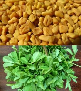 Bukkehorn - frø og plante