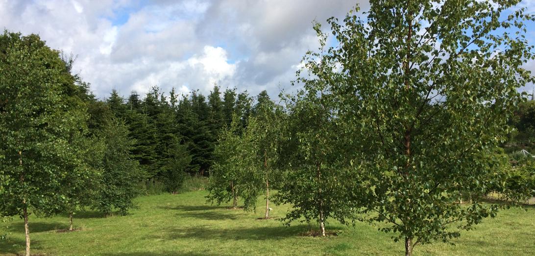 Et kig ud i arboretet