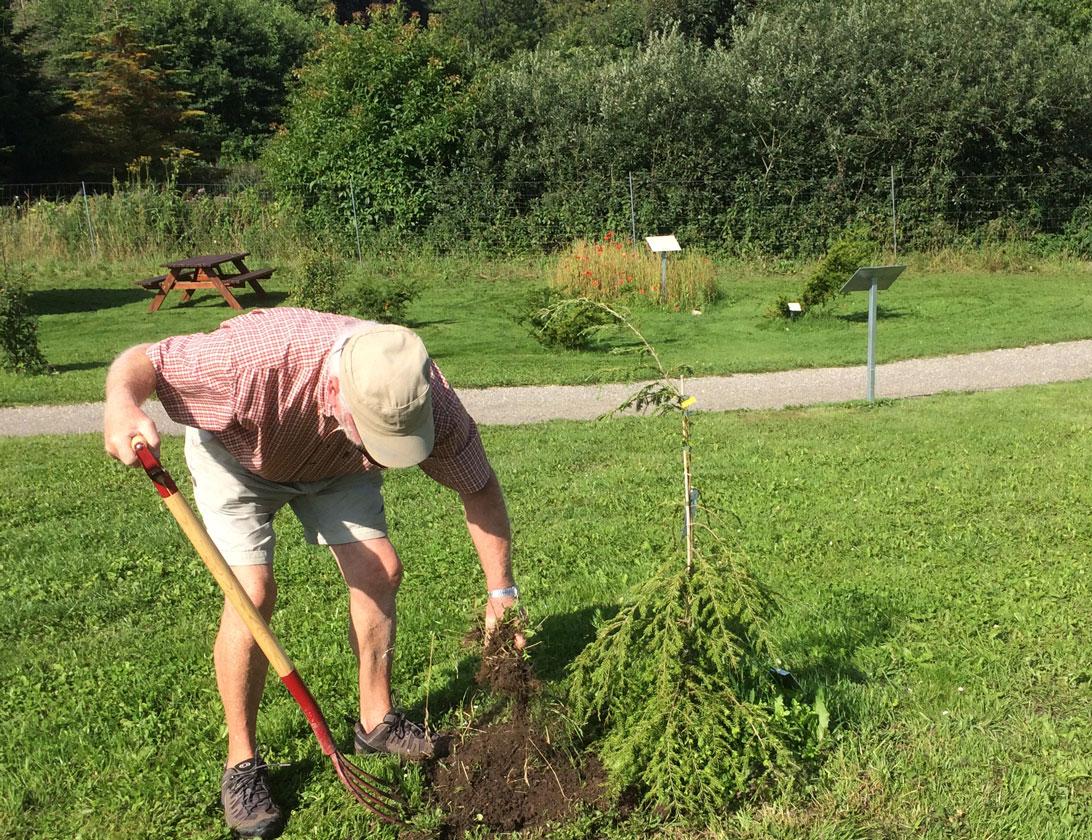 Flemming befrier træerne i arboretet for ukrudt.