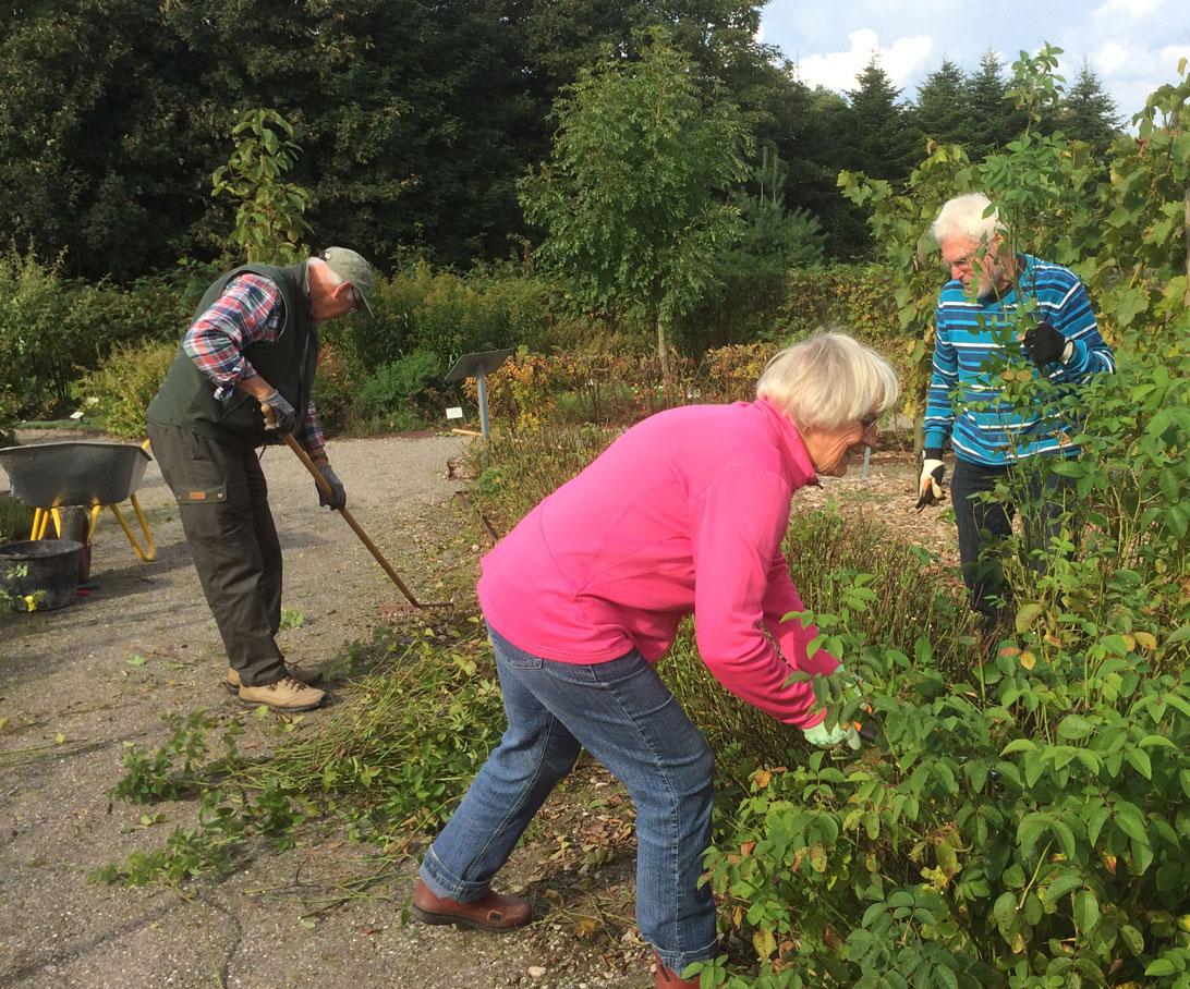 26. september 2017 Povl Erik, Annie og Niels Ove klipper Tranekærrosen ned.