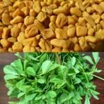 Bukkehorn -frø og plante