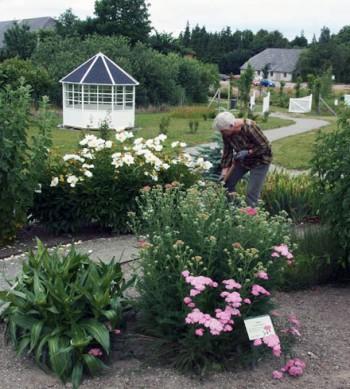 Gitte Dalskov arbejder i haven for åndedræt og kredsløb