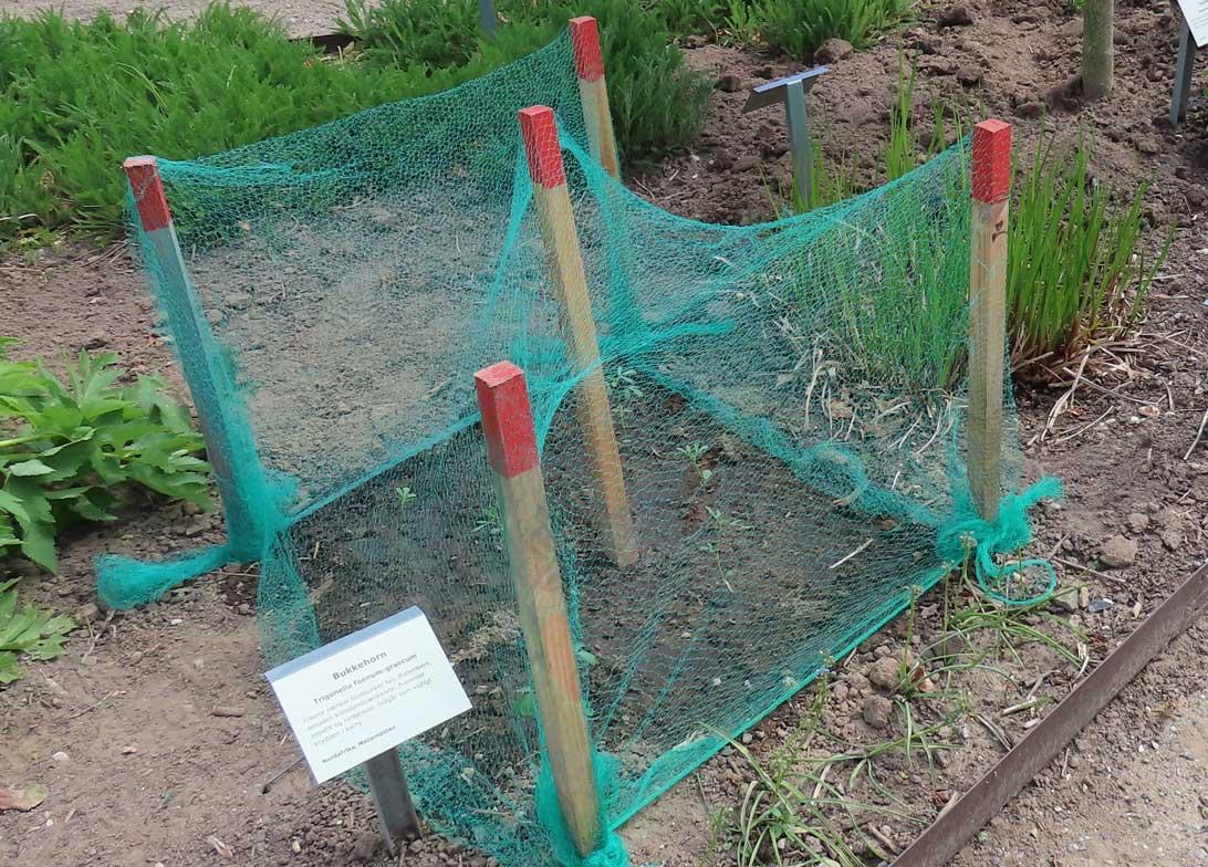 14. maj 2019 Haresikring af spæde bukkehornsplanter i Haven for fordøjelse, stofskifte og ernæring