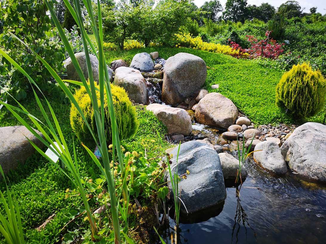 Idyl ved den lille dam i Haven for nervesystem og bevægeapparat.
