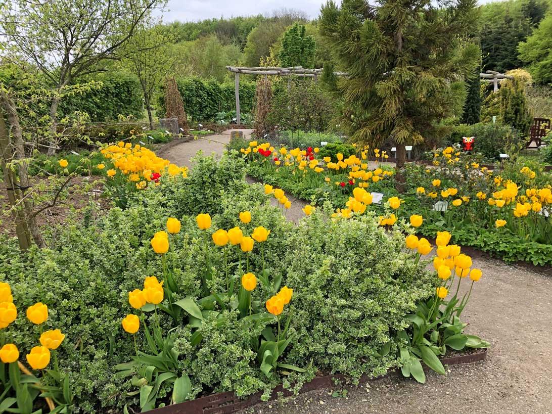 18. maj 2021: Tulipanerne i Haven for urin- og kønsveje.